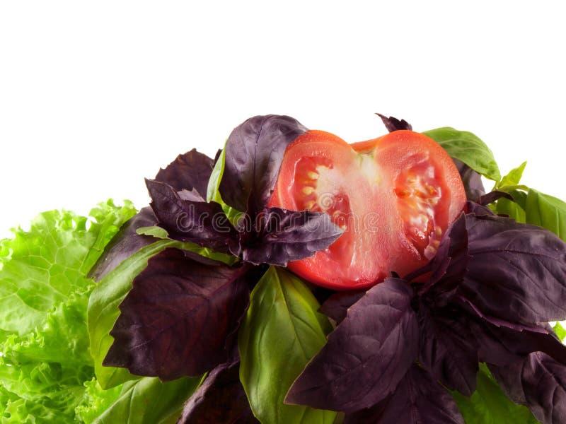 Mistura da salada com manjericão, alface, tomate. Isolado. fotos de stock royalty free