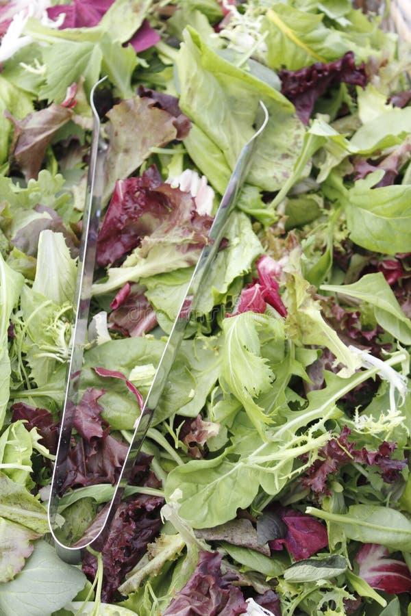 Mistura da salada de Mesclun com tongs imagem de stock