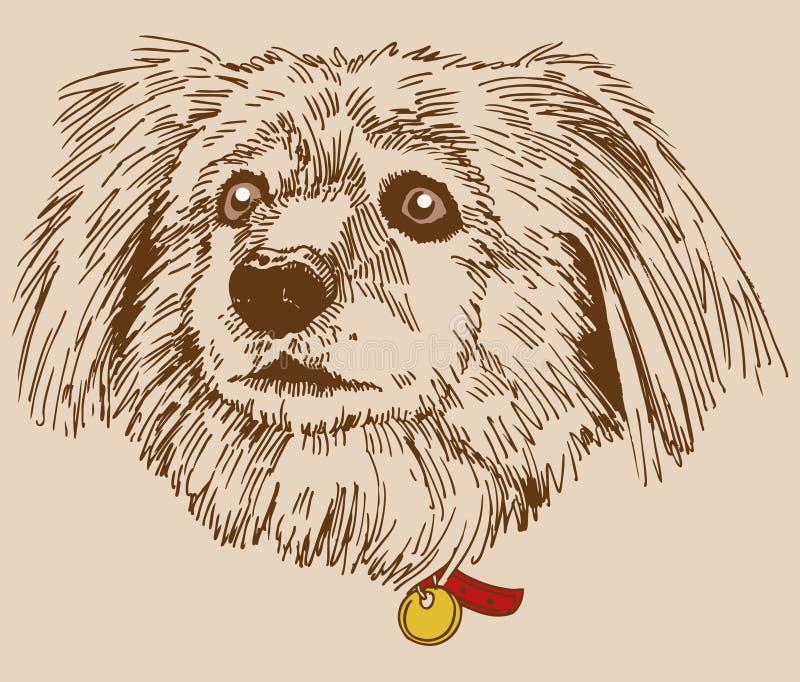 Mistura da Terrier-Caniche imagem de stock royalty free