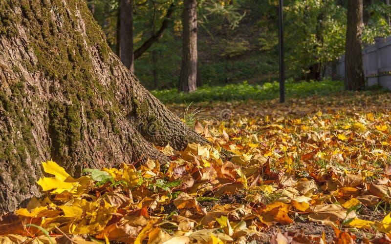 Mistura das folhas de outono com grande escala das cores imagens de stock royalty free