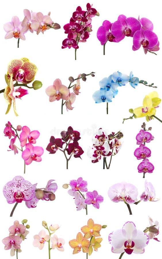 Mistura das orquídeas imagem de stock royalty free