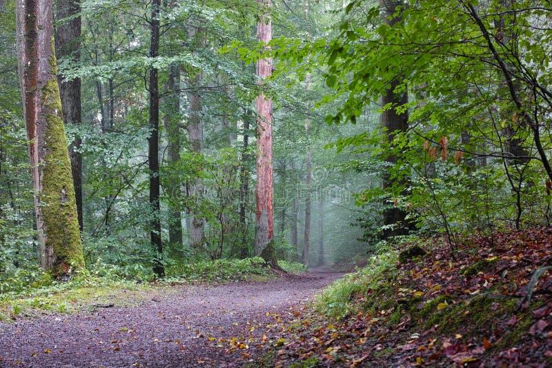 Mistura de floresta com terra e paisagem de verão imagens de stock royalty free