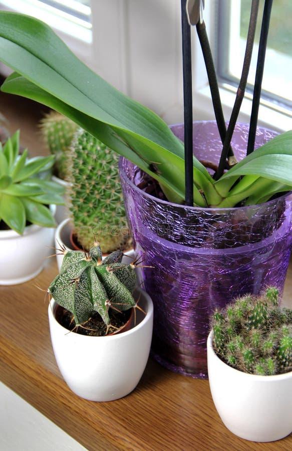 Mistura de houseplants bonitos fotos de stock