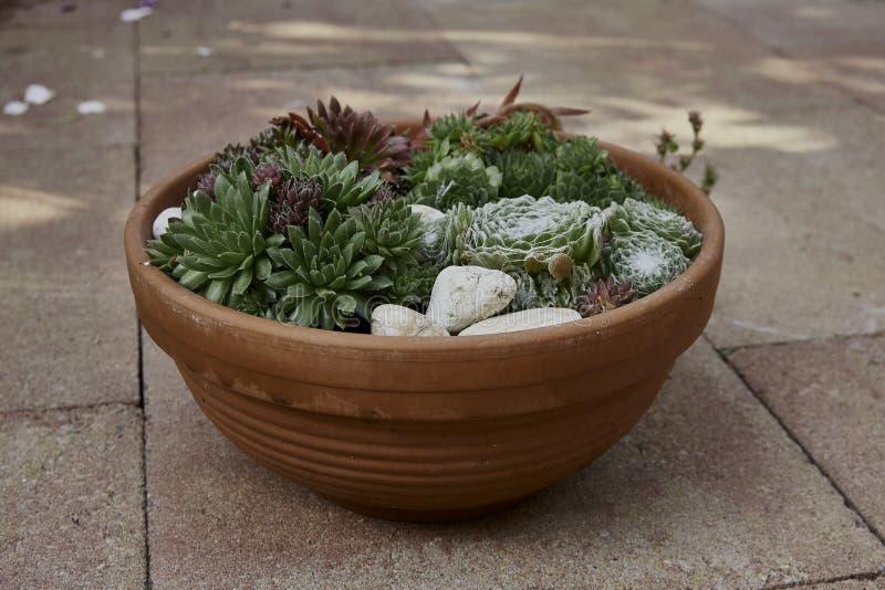 Mistura de plantas carnudas na cerâmica da terracota fotos de stock