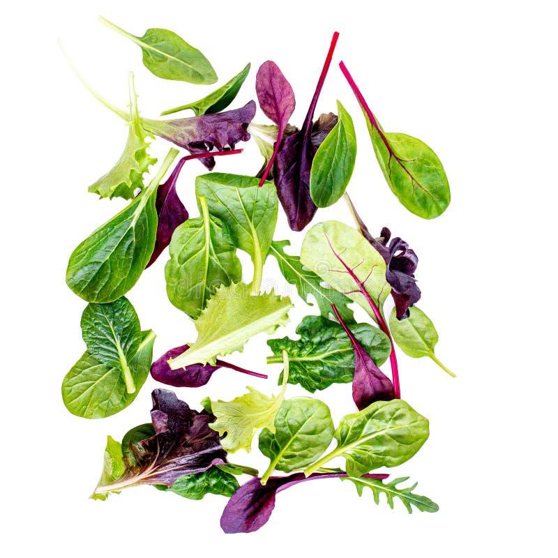Mistura de voo da salada com rucola, frisee, radicchio, acelga e erva-benta Salada verde isolada no fundo branco foto de stock royalty free