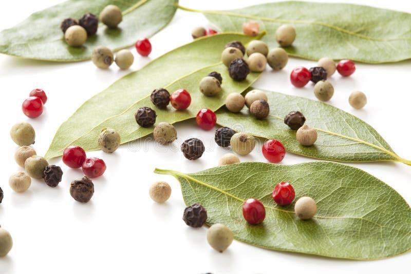 Mistura e louro-árvore coloridas das pimentas foto de stock royalty free