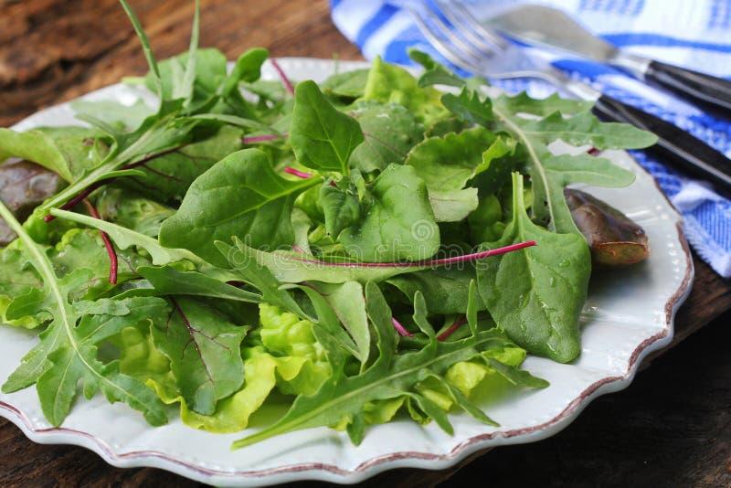 Misture as folhas frescas de espinafres de Nova Zelândia, rúcula, alface, beterrabas para a salada em um fundo de madeira escuro  fotografia de stock royalty free