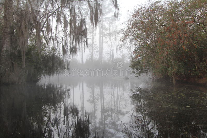 misty έλος okefenokee πρωινού στοκ εικόνα με δικαίωμα ελεύθερης χρήσης