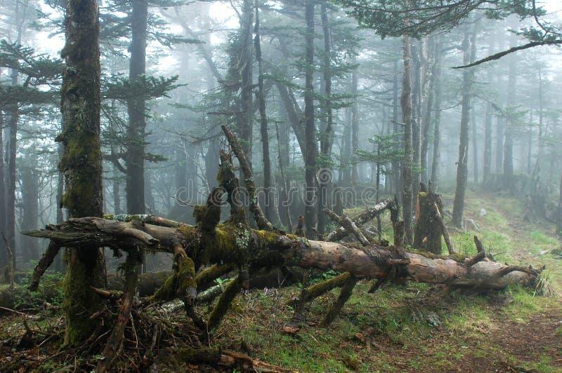 misty δάση στοκ φωτογραφία με δικαίωμα ελεύθερης χρήσης