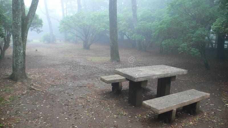 misty πάρκο πάγκων ξύλινο στοκ εικόνα