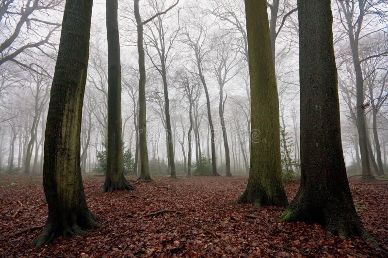 misty χειμερινά δάση στοκ φωτογραφία με δικαίωμα ελεύθερης χρήσης