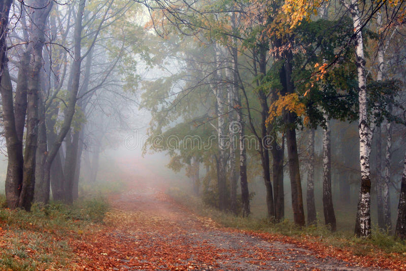 Misty alley early autumn morning. Misty alley in the old park in the early autumn morning royalty free stock image