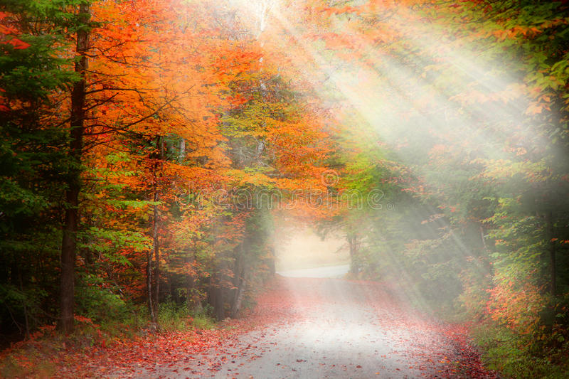 Misty autumn alley royalty free stock image