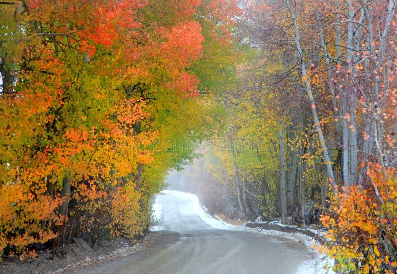 Misty autumn drive stock photos