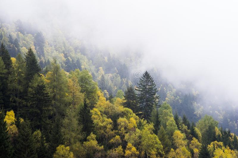 Misty Autumn Forest On Hillside Free Public Domain Cc0 Image