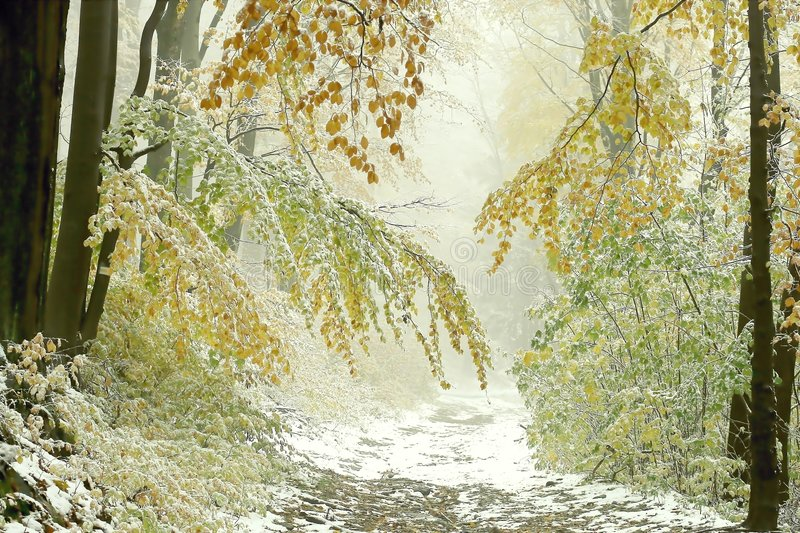 Download Misty Autumn Forest Path With First Snow Stock Image - Image: 8390573