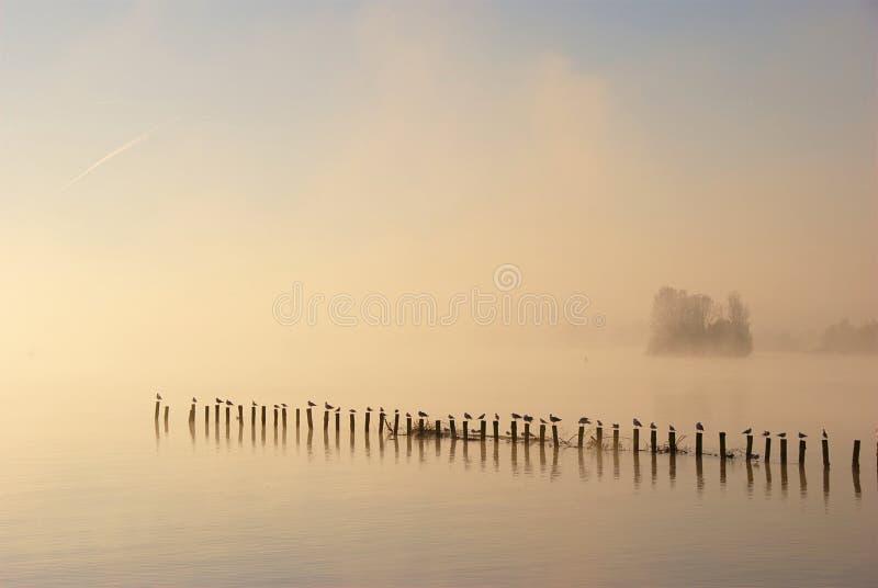 Misty Autumn Morning On Lake arkivbild