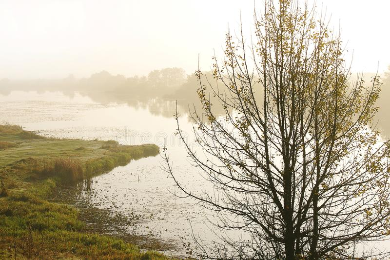 Misty autumn morning over the river. Lonely tree near the pond_ royalty free stock photo