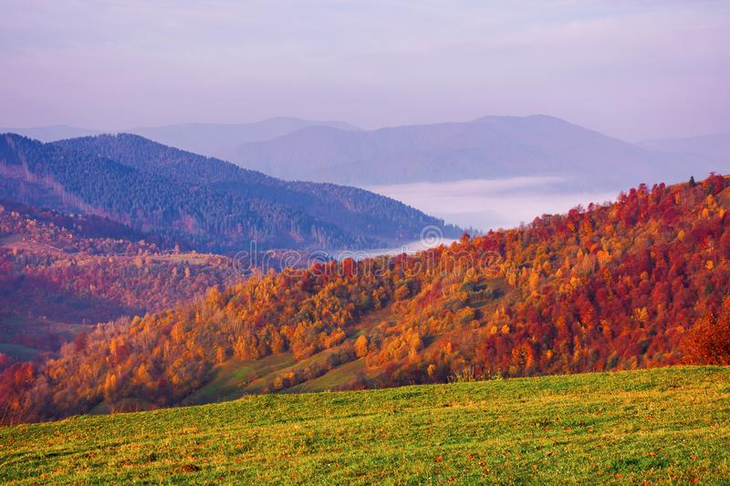 Misty autumn mountain landscape at dawn stock images