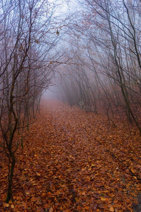 Misty Autumn Path na floresta fotografia de stock