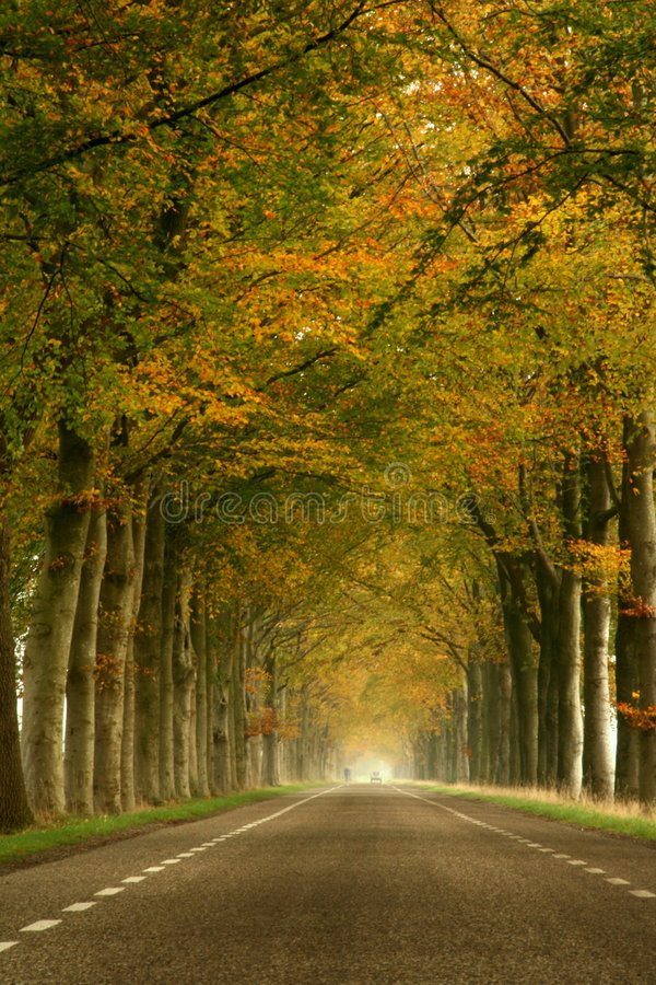 Misty autumn road. Misty and serene autumn road stock photography