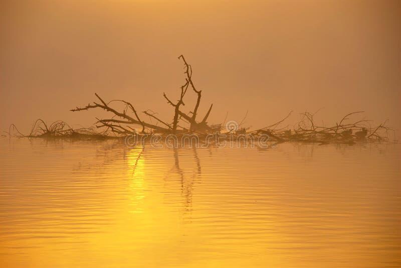 Misty Autumn Sunrise. Dry branches with ducks on misty autumn lake at sunrise stock photo