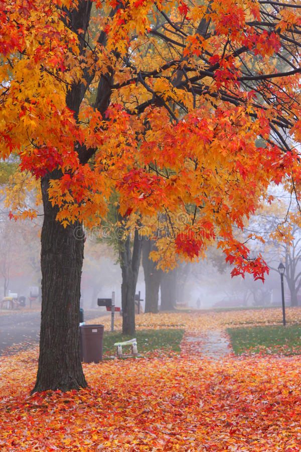 Misty autumn time royalty free stock image