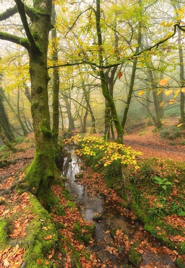 Misty Autumn Woods arkivfoto