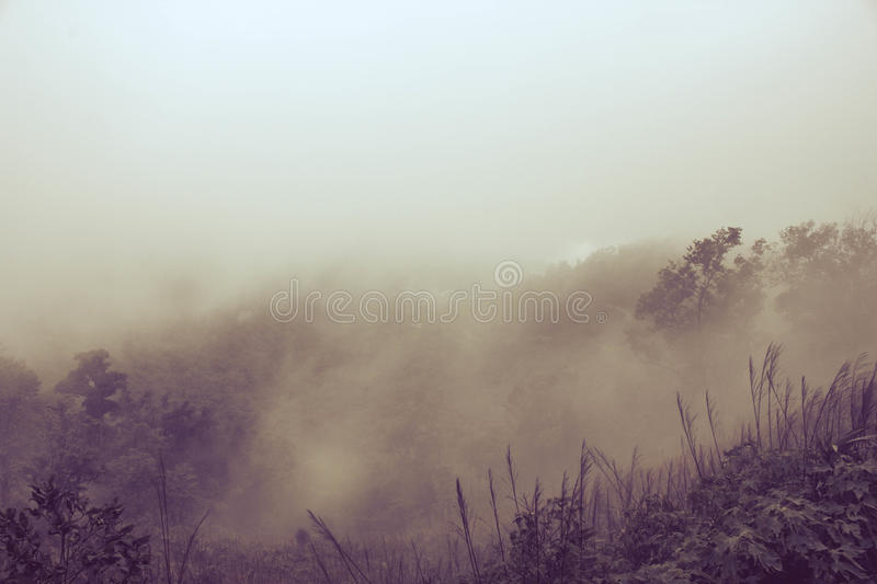 Misty Backgrounds photo stock