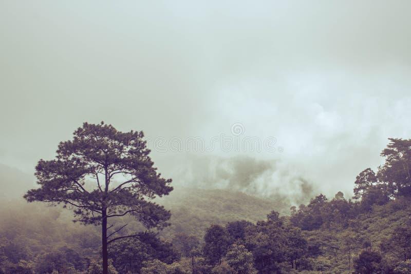 Misty Backgrounds royalty-vrije stock foto