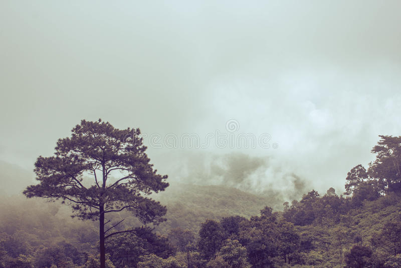Misty Backgrounds fotografia stock libera da diritti
