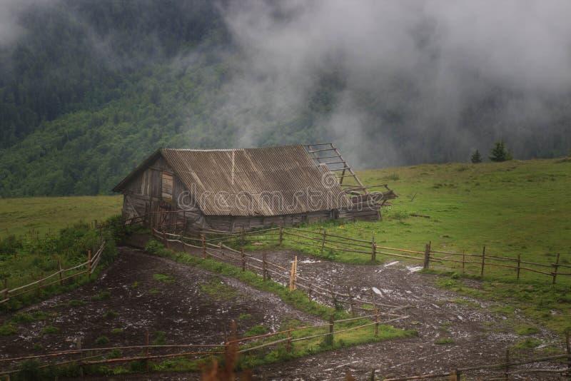 Misty Carpathian berglandskap med granskogen, blasten av träd som klibbar ut ur dimman royaltyfri bild