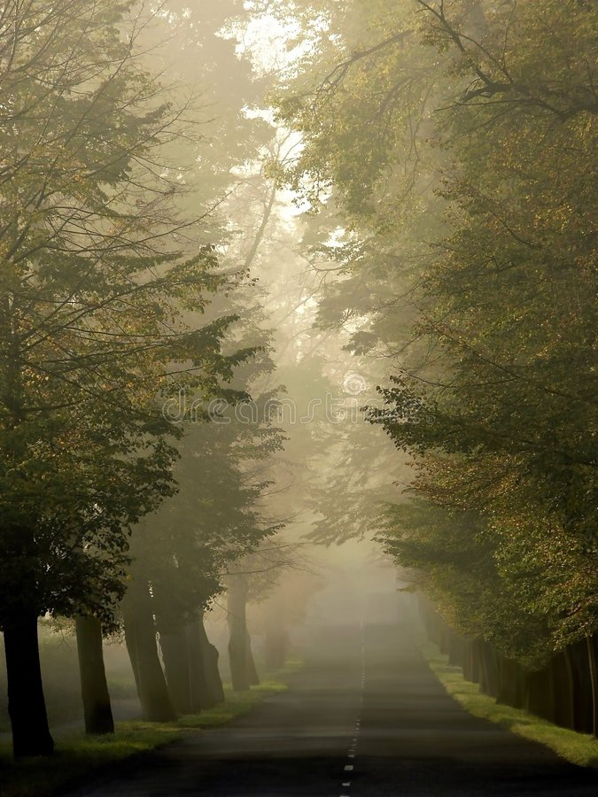 Download Misty Country Road Through Autumn Trees Stock Photo - Image: 7475338