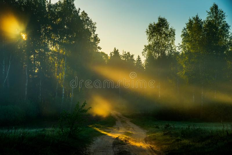 Misty dawn near forest stock photography
