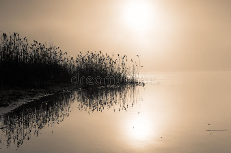 Misty dawn on the river.Horizontal view. Poland, summer. Misty dawn on the river Narew near the town of Serock, Mazovia.Very dense, morning mist over the river stock image