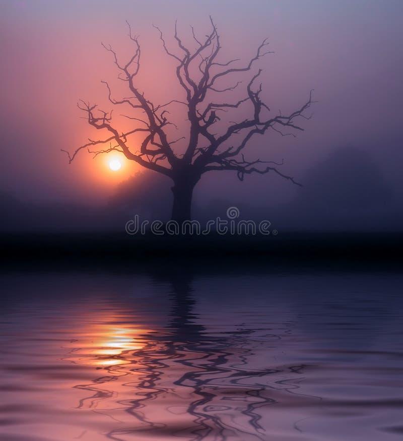 Misty dawn in Somerset