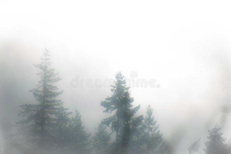 Evergreen trees rising in the mist royalty free stock photos