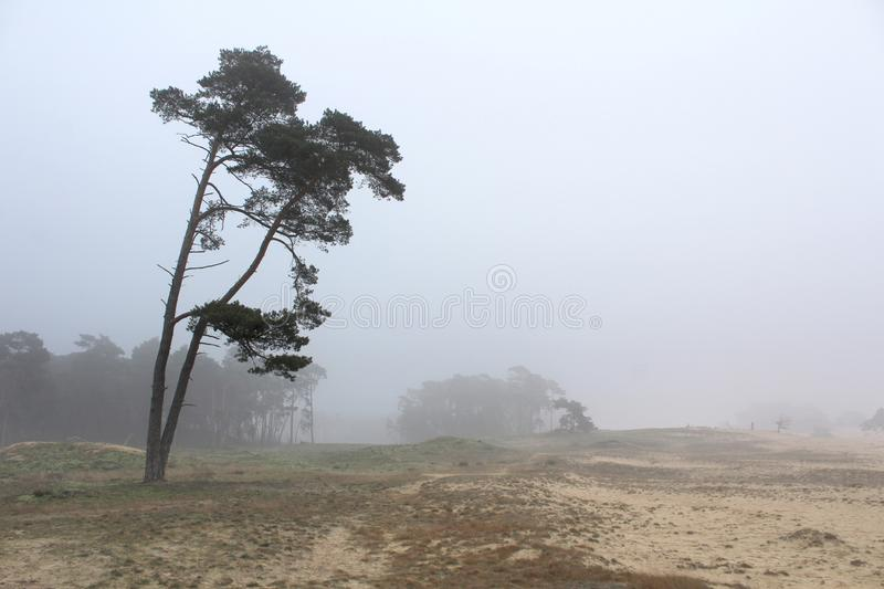 Misty Day at Wekeromse Zand near Ede, Netherlands. A lone tree on a very misty day at Wekeromse sand near Ede in Gelderland, in the Netherlands. It is an area of stock images