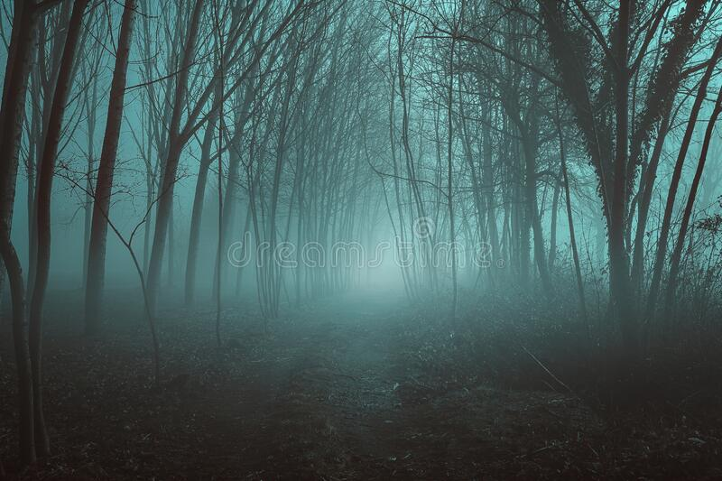 Misty desolate forest stock images