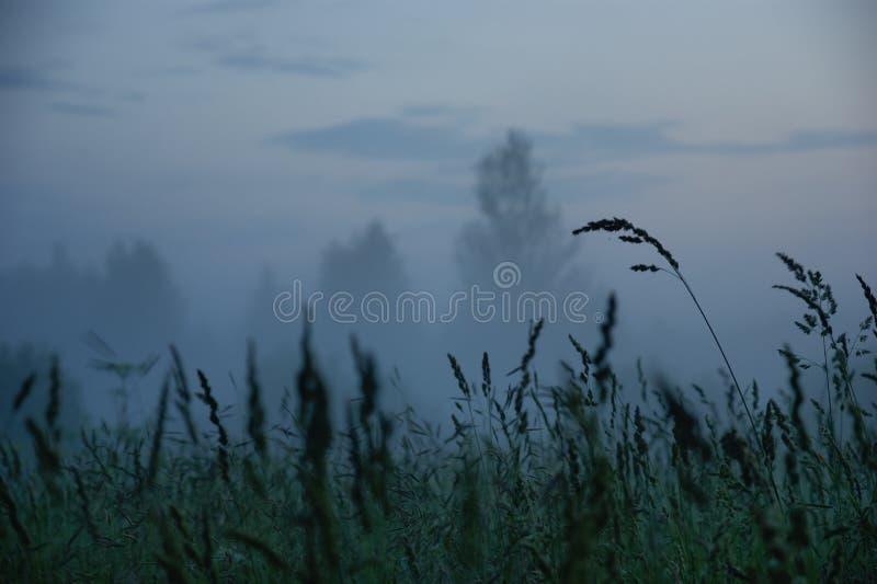 Misty evening stock photo