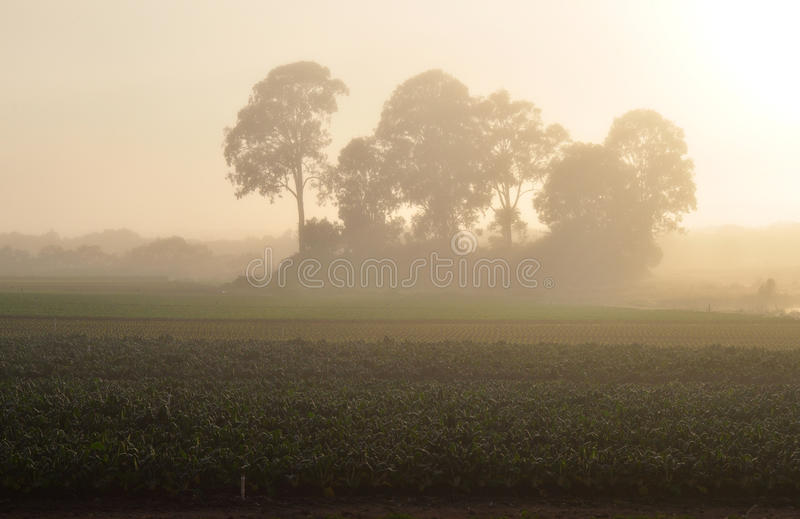 Download Misty farm sunrise stock photo. Image of peace, crops - 11787096