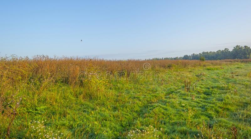 Misty field with flowers in wetland below a blue sky at sunrise. In summer stock photos