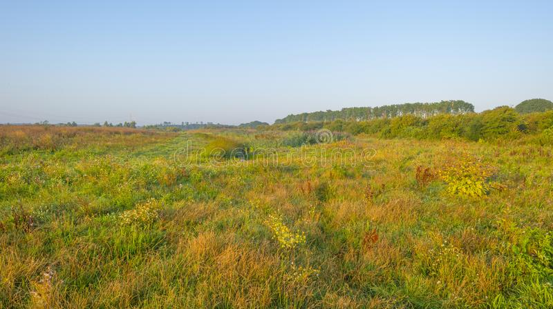 Misty field with flowers in wetland below a blue sky at sunrise. In summer royalty free stock photography