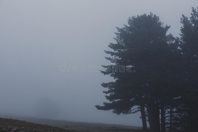 Misty fog landscape in a forest. winter or autumn concept royalty free stock photo