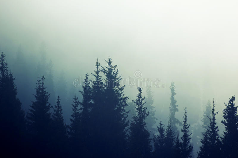 Misty fog pine forest mountain slopes color toning royalty free stock photos