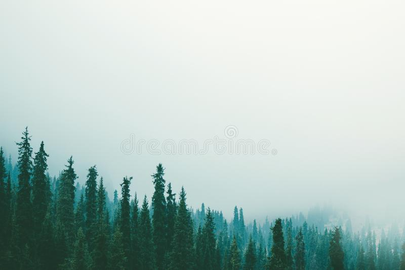 Misty fog pine forest mountain slopes color toning royalty free stock image