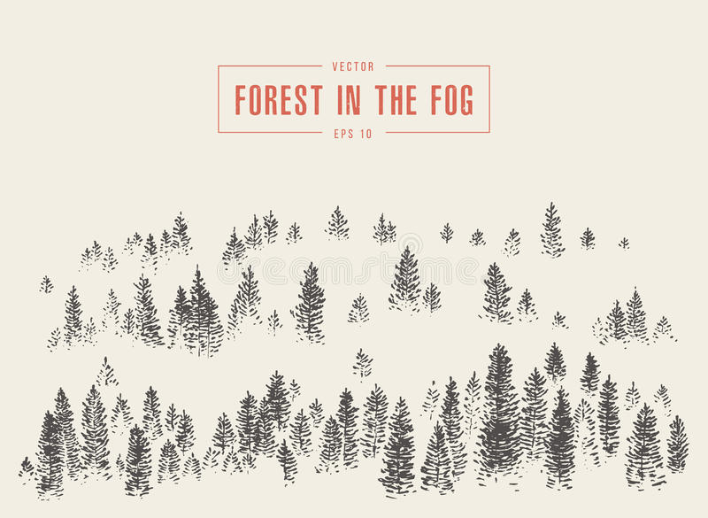 Misty fog pine forest mountain vector drawn sketch royalty free illustration