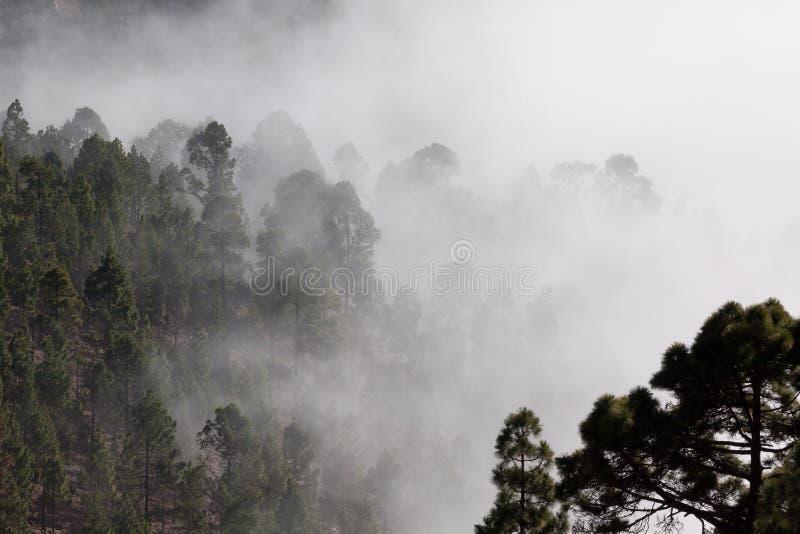 Misty Forest Free Public Domain Cc0 Image