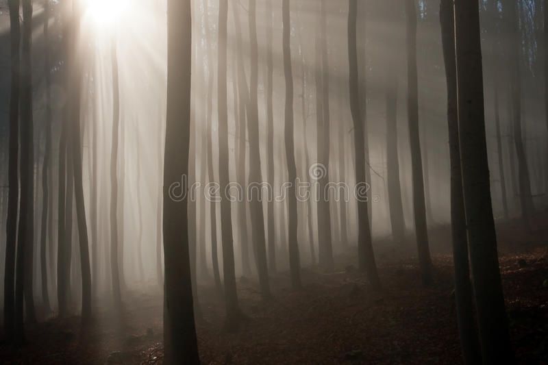 Download Misty Forest In The Autumn Morning Stock Photo - Image: 27859970