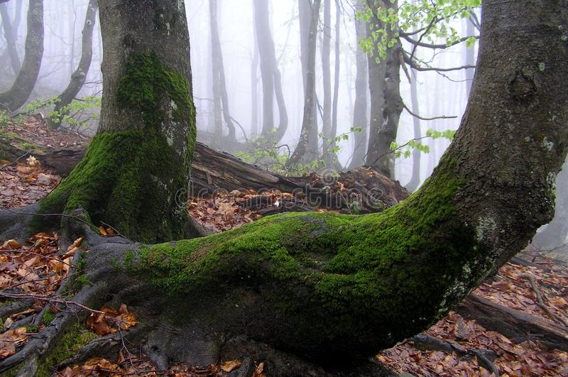 Misty forest royalty free stock photography